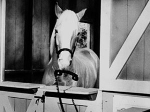 Mr-Ed-show-horse_320